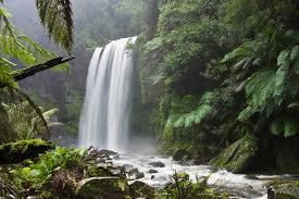 hopetoun falls beech forest near great otway national park victoria