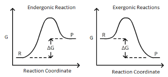 Free Energy Of Formation Chart Connection Between E_ Cell G And K Chemistry