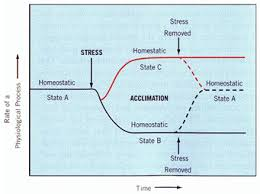 acclimate definition. figure 3.31 a schematic relationship between stress and acclimation (source: hopkins w.g., hüner n.p.a., 2009) acclimate definition