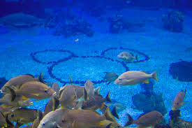 underwater restaurant disney world. A Not So Hidden Mickey Mouse Is On The Seabed Floor Of Main Aquarium In Underwater Restaurant Disney World