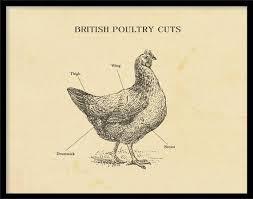 Chicken Print Butcher Chart Sizes A4 To A2 Butcher Cuts Of Chicken Etching Print Meat Cut Chart Kitchen Art Restaurant Art Kitchen Art