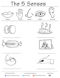 5 Senses In Spanish Cinco Sentidos Simply Our Five Worksheets ...