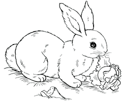 realistic rabbit coloring pages. Plain Realistic Peter Rabbit Colouring Pages Free To Print Realistic  Bunny Coloring  In Realistic Rabbit Coloring Pages I