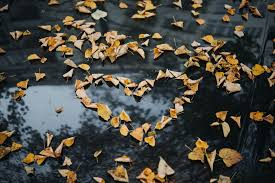 Fall In Love Pictures | Download Free Images on Unsplash