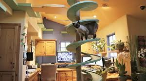 Cat House Man Turns His House Into Indoor Cat Playland And Our Hearts
