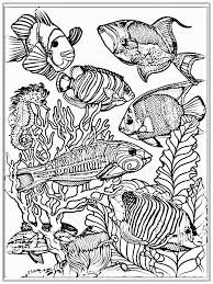 Small Picture Fancy Fish Coloring Pages For Adults 93 In Line Drawings With Fish