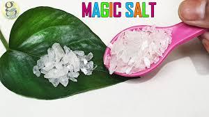 10 benefits of epsom salt in gardening farming