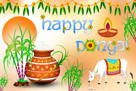 happy pongal festival images wishes quotes sms messages happy pongal images 2017