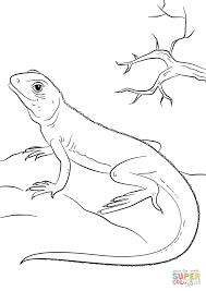 Small Picture Lizard coloring page Free Printable Coloring Pages