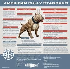 27 Described American Bully Breeding Color Chart