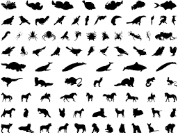 Animals Birds And Insects Names In Urdu English Tables