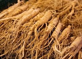 Ginseng Description Traditional Medicine Species