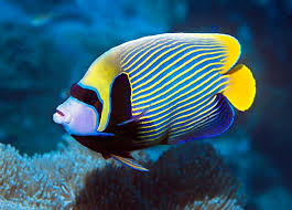 if you saw a beautiful dream about a fish you will definitely want to find