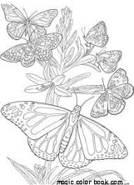 Small Picture Stunning Coloring Pages Spring Butterflies Gallery Coloring Page