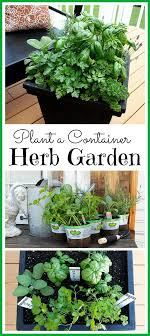 how to plant a container herb garden 6 great tips for planting a container herb