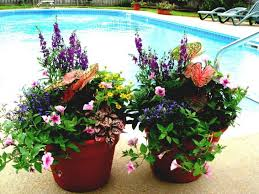 13 Container Gardening Ideas  Potted Plant Ideas We LoveContainer Garden Ideas For Front Porch