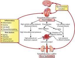 Right Vs Left Sided Heart Failure Chart Heart Failure European Heart Journal Oxford Academic