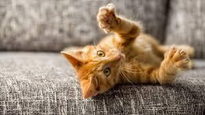 Katzenkrankheit Darum Ist Sie Für Menschen So Gefährlich Brigittede