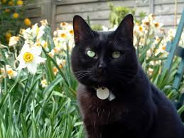 Image result for black cats in spring