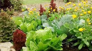 organic gardening organic vegetable garden