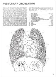 Small Picture Human Anatomy Coloring Book 002613 Details Rainbow Resource