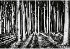 Bolcom Fotobehang Ghost Forest 4 Delig 368 X 254 Cm Zwart Wit