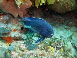 Australian Reef Fish Species Chart 5 Reef Fish Youll Find In South Australia Good Living
