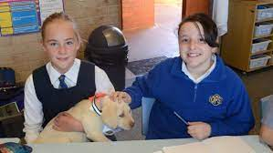 New student Heidi is the popular puppy at Orange Public School | Central  Western Daily | Orange, NSW