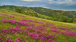 Flower Landscape 29017