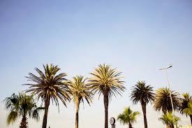 palm trees tumblr. Download Palm Trees Tumblr