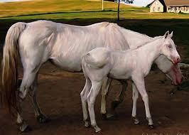 baby white horse. Fine Baby White Horses Greeting Card Featuring The Painting Baby Horse By Jill  Baker Throughout E