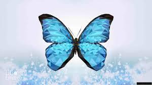 Wallpaper Butterfly [HD]