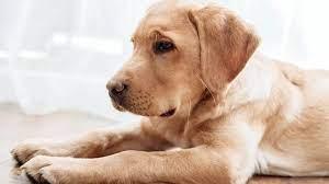 Hayvanları Koruma Kanunu TBMM'den geçti haberi
