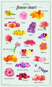 Assamese Flower Chart 43 Best Entertaining With Edible Flowers Images In 2019