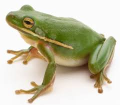image of a frog. Brilliant Frog Frog To Image Of A