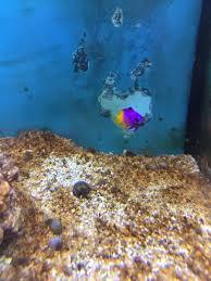 petco animals fish. Delighful Petco Click  For Petco Animals Fish