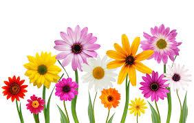 """Attēlu rezultāti vaicājumam """"spring flowers"""""""