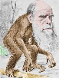 Image result for darwin