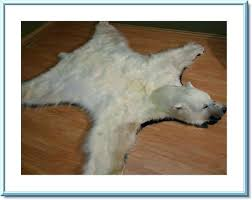 white bear rug polar fur traders bear rug taxidermy for faux polar bear rug white