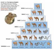 10 Best Linnaeus Chart Images Linnaeus Challenges Chart