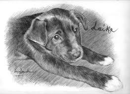 Disegnare E Dipingere Animali Dossier Stile Arte Con Disegni Animali