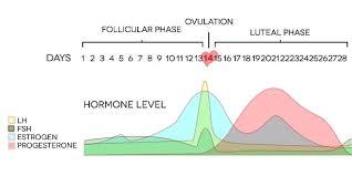 31 Day Menstrual Cycle Chart Fertility Calculator Calendar Calculate Your Fertility