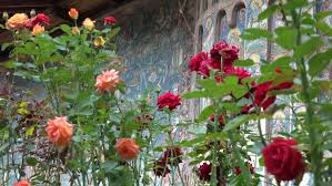 ultra hd 4k beautiful painted old church among rose flower blue picture landmark decoration by day