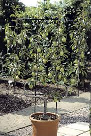 Cordon Espalier And Fan Trained Fruit TreesGrowing Cordon Fruit Trees