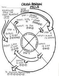 93bed5a5b835ca46077eca94a035da57 biology teacher ap biology macromolecules graphic organizer google search teaching on meiosis and mitosis comparison worksheet