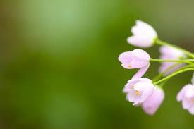 simple nature background. Plain Background Flowers And Pink Image On Simple Nature Background