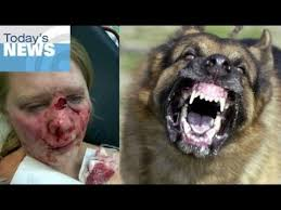 german shepherd attack victims. Delighful Attack YouTube Premium To German Shepherd Attack Victims