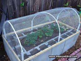 Small Picture Raccoon and squirrel proof cages for our veggie garden PVC pipe
