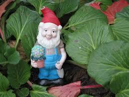 cheap garden gnomes. Gunther The Garden Gnome Gardening Cheap Gnomes I
