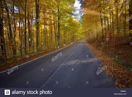Light Colored Asphalt Splendid Image In The Forest Colored Leaves Asphalt Road